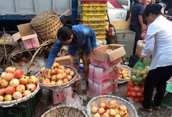 Cơ quan chức năng khẳng định Việt Nam chưa có vùng trồng lựu tập trung làm hàng hóa, lựu ở chợ được nhập từ Trung Quốc