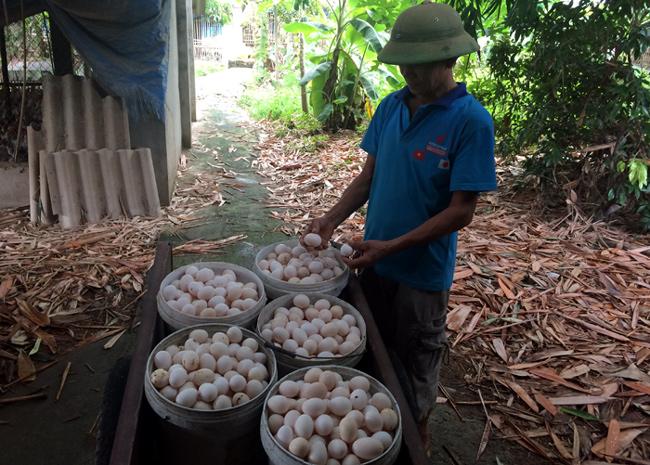 Dân trong nghề đặt nghi vấn trứng gà ta giá rẻ bán ở chợ chính là trứng gà Ai Cập nuôi công nghiệp