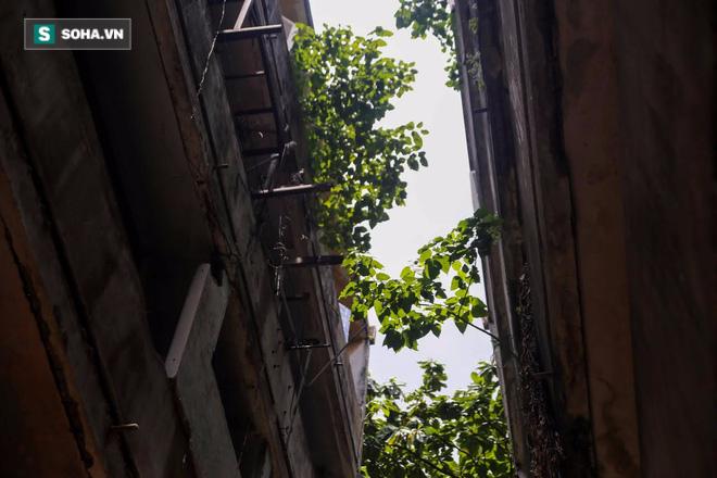 Trên rất nhiều bức tường, ban công bị cây mọc um tùm. Cư xá Thanh Đa là một trong những chung cư đầu tiên tại TP.HCM, xây dựng từ những năm 1960. Riêng lô 4, 6 được xây dựng từ năm 1972. Cư xá là nơi ở của các sĩ quan chính quyền cũ. Các căn hộ có diện tích khoảng 80m2.
