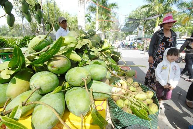 Tuy là giống xoài chỉ phục vụ ăn tươi nhưng thị trường tiêu thụ nội địa vẫn tốt giá giao động từ 22.000 -35.000 đồng/kg. Ảnh: Ngọc Trinh