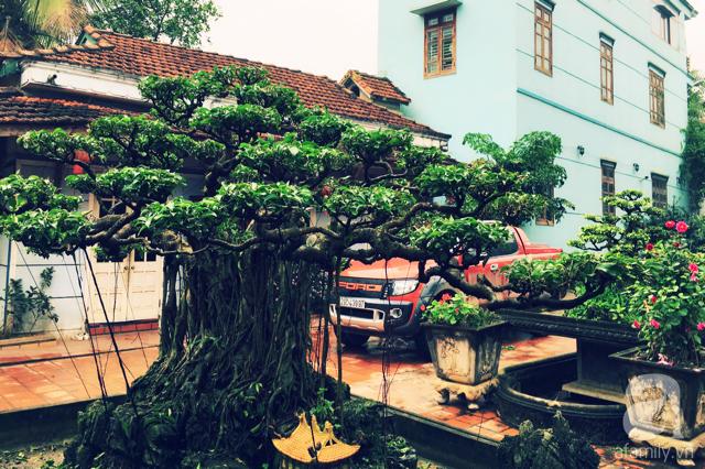 Những gốc bonsai hàng chục, thậm chí là hàng trăm tuổi trong khu vườn nhà chị Thùy Anh.