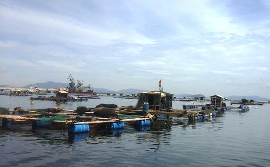 Khu vực nuôi cá lồng của người dân xã Nghi Sơn - Thanh Hóa
