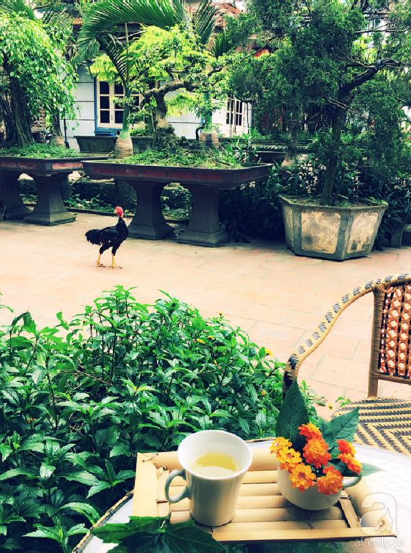Góc ngồi uống cà phê ngắm sân vườn cực đẹp.
