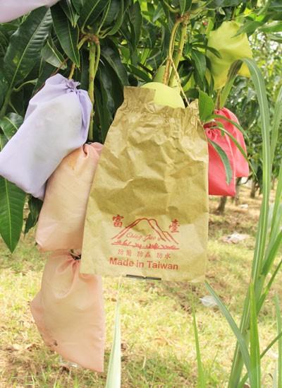 Nông sản được trồng trong túi lạ nông dân trồng xoài bị nghi ngờ về sản phẩm: Ảnh: Nông Nghiệp