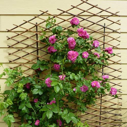 Việc tự tạo một hàng rào hoa dọc bức tường ngoài ban công sẽ mang đến cho ngôi nhà sự mới lạ và thu hút mọi ánh nhìn của khách đến thăm nhà.
