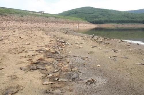 Hiện tượng cá chết không những gây thiệt hại kinh tế và ảnh hưởng môi trường. Phương án xử lý môi trường, chính quyền xã đã làm việc với các hộ và huy động lực lượng thanh niên để thu gom xử lý. Hiện, do số lượng mấy ngày gần đây cá chết quá nhiều nên xử lý chưa hết được. Cuối tuần này sẽ triển khai tiếp đợt 2 thu gom cá chết.