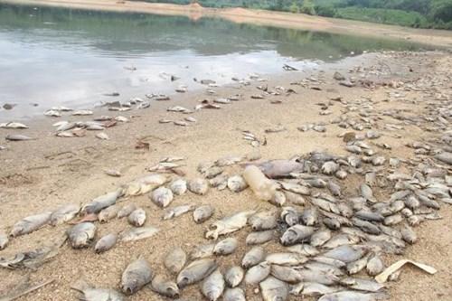 """""""Với số lượng cá chết như vậy thì thiệt hại rất lớn. Rất mong các cơ quan chức năng sớm vào cuộc tìm nguyên nhân và hỗ trợ thiệt hại cho các hộ dân"""" – ông Đông nói."""