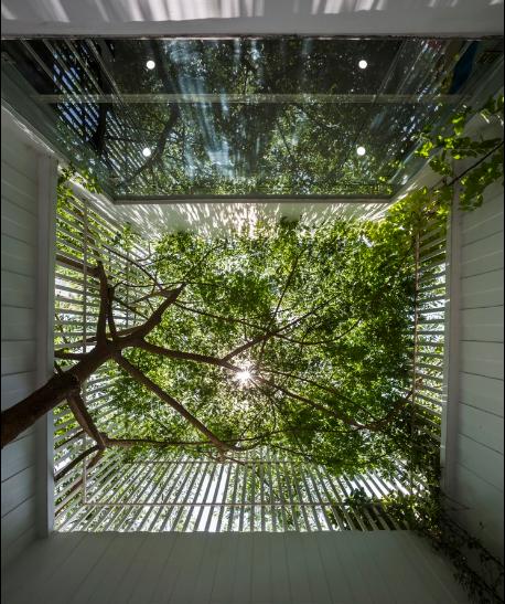 Từ chiếc ghế nhỏ ngước nhìn lên trên là cả một rừng cây lá ngút ngàn xanh mát.