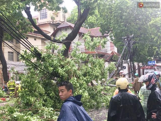 Những ngọn cây lớn đổ gục kéo theo cả đường dây điện
