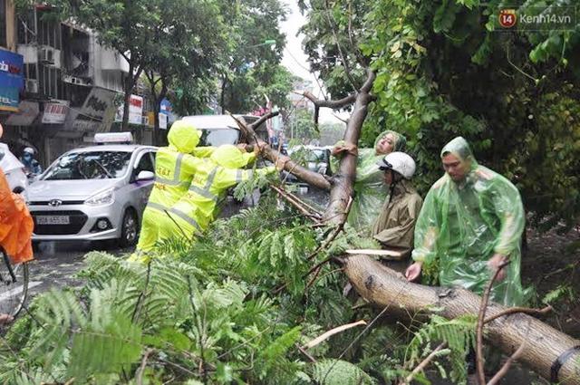 Khu vực Lê Duẩn, lực lượng chức năng cùng công nhân công ty cây xanh cũng đang tiến hành dọn dẹp cây đổ chắn ngang đường.