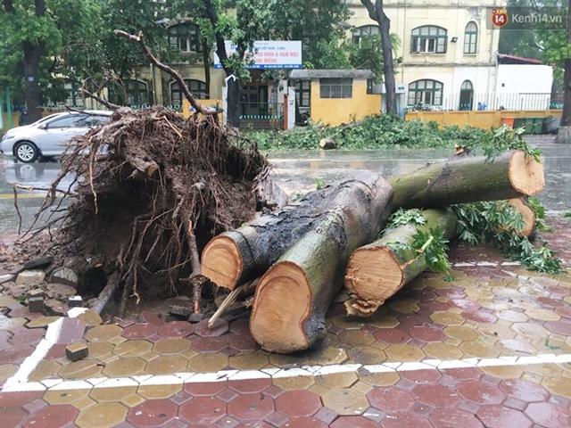 Cây đổ đè bẹp chiếc taxi trên phố Hai Bà Trưng đã được dọn dẹp, cắt thành khúc để trên vỉa hè.