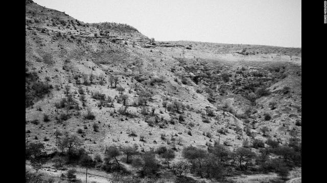 Trên một ngọn đồi lớn, chỉ còn lại số ít cây đang dần chết khô vì nắng nóng.