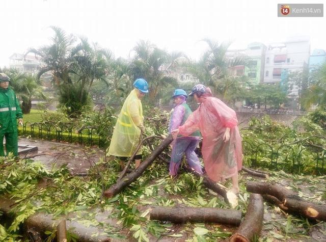 Công nhân công ty cây xanh cũng đang tiến hành dọn dẹp cây đổ tại khu vực đường Láng.