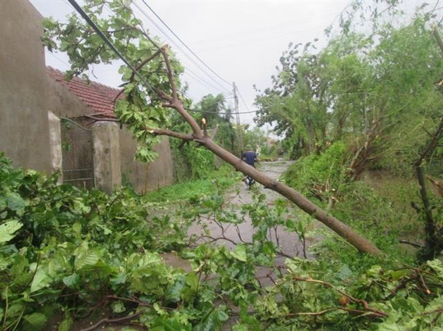 Cây xanh gãy đổ la liệt tại Nam Định.