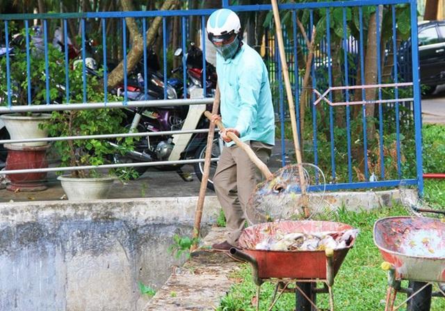 Đến chiều nay, nhân viên công ty thoát nước và xử lý nước thải Đà Nẵng vẫn chưa vớt hết số cá bị chết