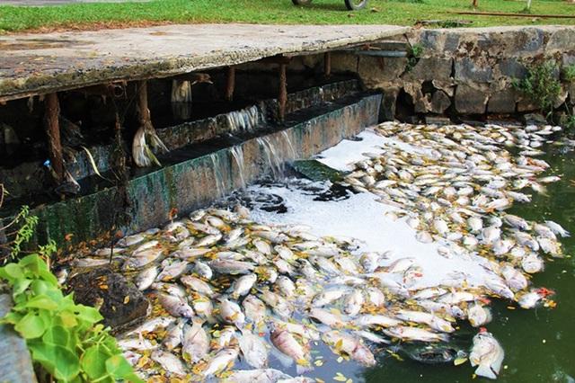 Cống nước xả thải hôi thối ra hồ nước trong công viên