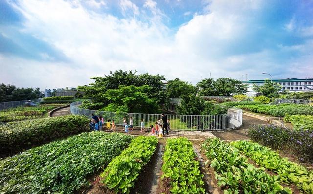 Điểm đặc biệt ở ngôi trường này đó là ngay trên mái nhà có thể tận dụng trồng rất nhiều loại rau phục vụ nhu cầu rau sạch hàng ngày cho các con