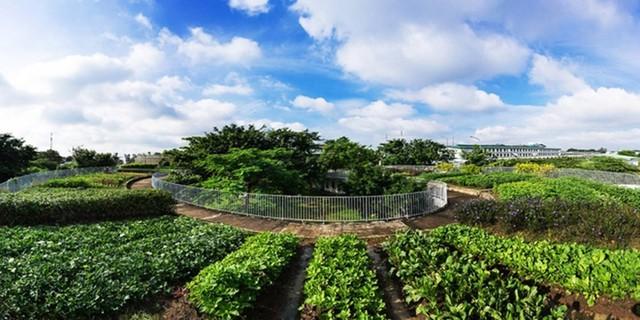 Đất được xới lên thành những luống và mỗi luống lại được trồng một loại rau khác nhau.