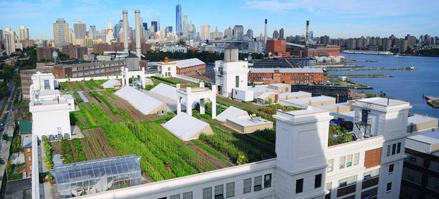 Nằm trên đỉnh của một nhà kho sáu tầng, nông trại hữu cơ trên sân thượng lớn nhất trên thế giới ở Bắc Boulevard, thuộc quận Queens, New York (Mỹ) đã gây sự chú ý đặc biệt. Trải dài trên diện tích 10.000m2, trang trại này không chỉ trồng các loại rau củ quả mà mà còn nuôi cả gà....
