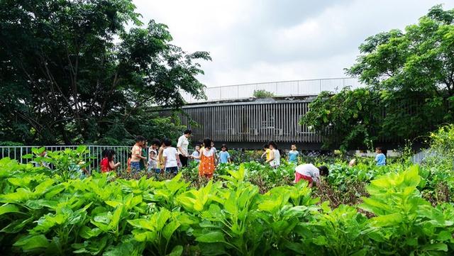 Các con tỏa ra vui sướng khi được cùng các cô chăm sóc cho vườn rau sạch ngay trên mái nhà.
