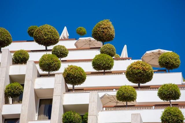 Khách sạn đặc biệt ở Israel. Những cây tán tròn được trồng ngay trên mái của tòa nhà này mang đến cảnh quan đặc biệt, tạo bóng râm và không khí trong lành cho khách đặt phòng ở đây.