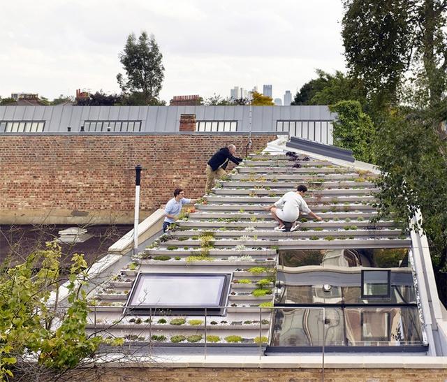 Khu vườn độc đáo nằm trên mái nhà 2 tầng ở London (Anh). Điểm đặc biệt thu hút mọi ánh nhìn của ngôi nhà này đó là khu vườn được thiết kế dạng bậc thang trên mái nhà dốc giống như kim tự tháp cây. Các loại cây được lựa chọn trồng đều rất dễ chăm sóc, không cần tưới nhiều nước.