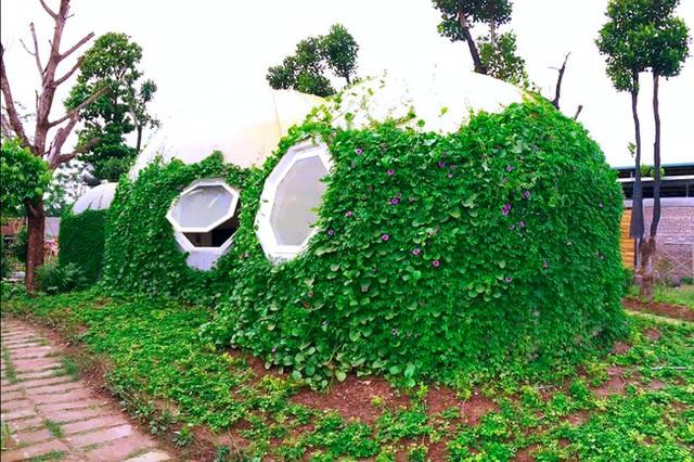 Ngôi nhà hình tròn trong trí tưởng tượng của con trai anh đã hoàn thành, được anh đặt tên là TomoBio. Anh cũng đã trồng thêm cây hoa bao phủ bên ngoài.