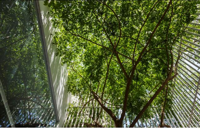 Không chỉ có vậy cây xanh còn có chức năng lọc không khí mang lại bầu không khí trong lành rất tốt cho sức khỏe của con người.