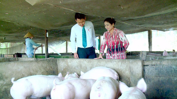 Hai ngân hàng đầu tiên vào cuộc giải cứu ngành chăn nuôi lợn