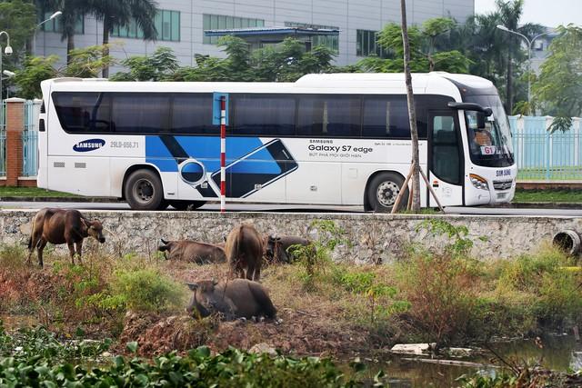 'Xe buýt của Samsung chở công nhân đến nhà máy. Ảnh: Bloomberg.'