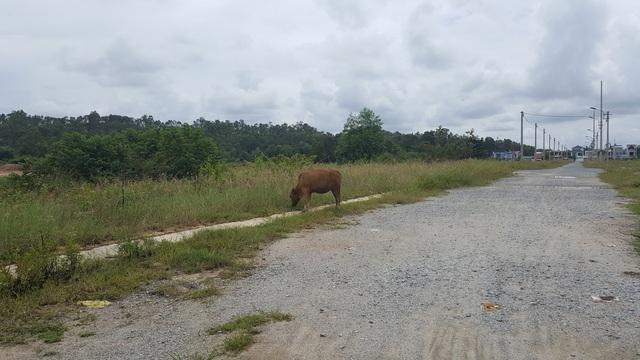 Dự án hiện giờ chỉ là một bãi đất trống bao la, một vài con đường nội bộ được trải đá, cỏ xanh cao hơn đầu người là môi trường sống tốt cho trâu bò