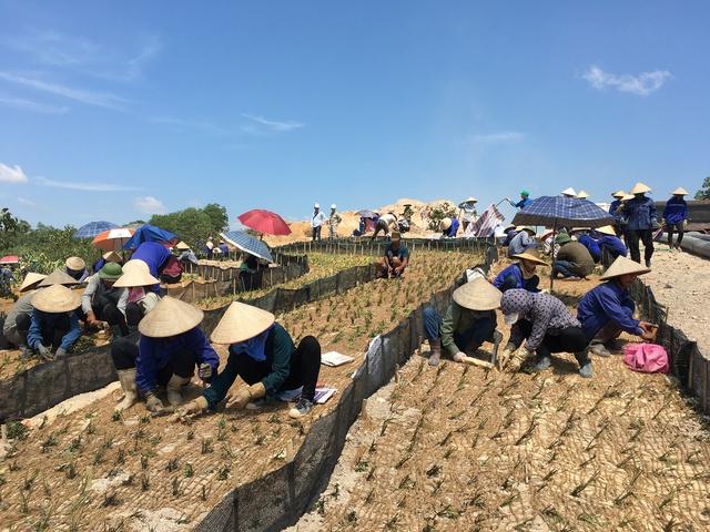 Có hơn 1000 lao động đang xây dựng trên công trường, trong đó một nhóm công nhân đang trồng cỏ tại hố golf số 8.
