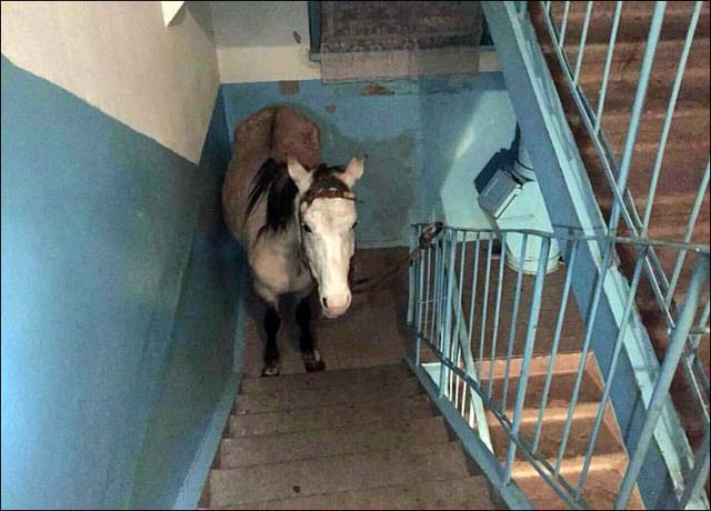 Động vật được đưa vào trong nhà tránh rét.