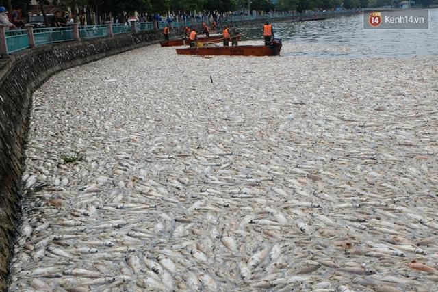 14h chiều 3/10, cá vẫn chết trắng hồ Tây.