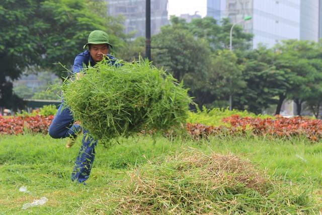Công nhân cắt, dọn cỏ