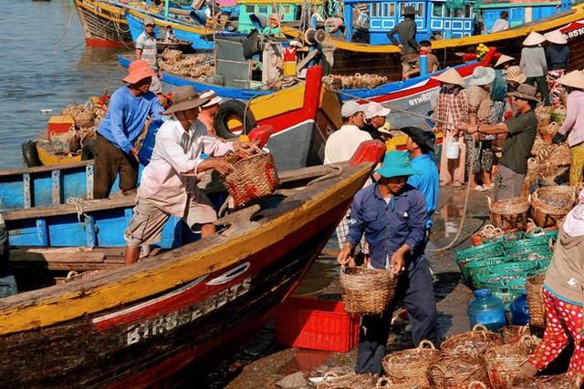 Theo đúng quy chuẩn truyền thống, nước mắm gồm cá và muối. Tại các làng nghề nước mắm, cá sau khi đánh bắt về được các cơ sở sản xuất nước mắm thu mua tại ghe và đưa về muối mắm ngay. Ảnh: Đình Hòa.