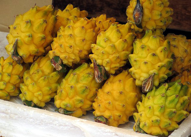 Tuy nhiên, việc thu hoạch loại trái cây này không hề đơn giản bởi chúng có gai sắc nhọn ở các đầu mắt.
