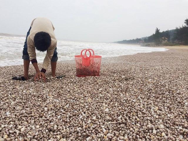 Người dân mang dụng cụ hồ hởi ra biển vớt sò.