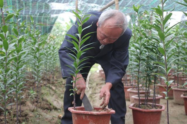 Ông Bình hướng dẫn cách trồng hoa ly trong chậu cảnh