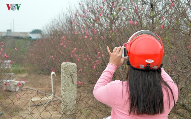Một số bạn trẻ ghi lại những khoảnh khắc Đào nở sớm tại vườn Nhật Tân.