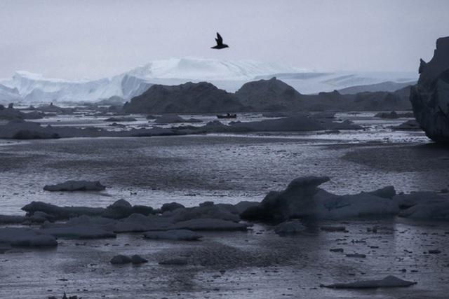 Nhiệt độ tại Bắc Cực tăng cao kỷ lục vào Giáng sinh năm nay Ảnh: AP