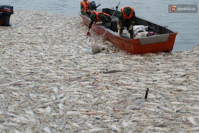 Cảnh tượng cá chết trắng một góc hồ Tây. Ảnh chiều 3/10.