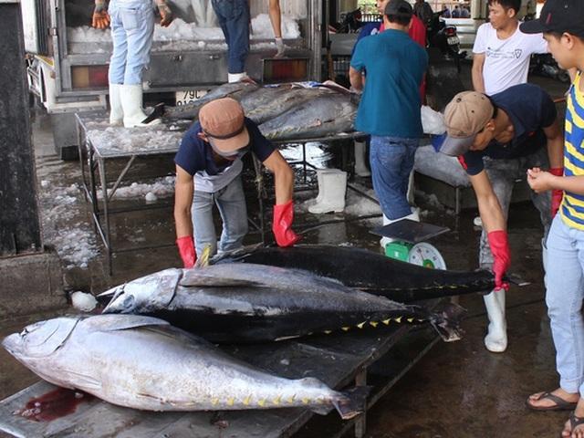 Cá ngừ được giá đạt 105.000 đồng tăng 10.000- 15.000 đồng/kg