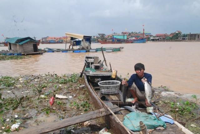 Cá chẽm chết sau lũ tại xã Quảng Lộc đều từ 2kg trở lên - Ảnh: QUỐC NAM