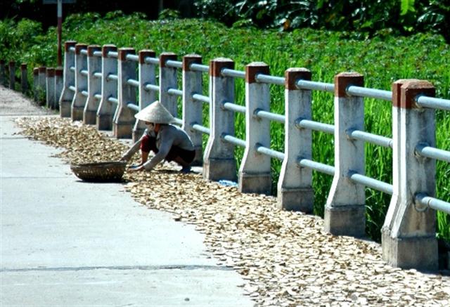 Sắn rớt giá người dân đem về chặt khúc phơi khô