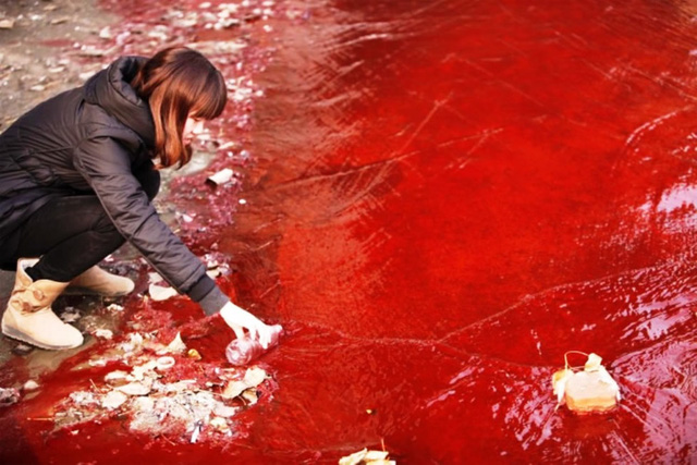 Một người phụ nữ đang lấy mẫu nước ở dòng sông Jian, Hà Nam, Trung Quốc. | ẢNH: STR/AFP/GETTY IMAGES