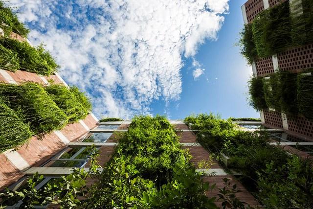 Cây xanh được phủ kín toàn bộ ban công, dọc hành lang và trên mái của khách sạn.