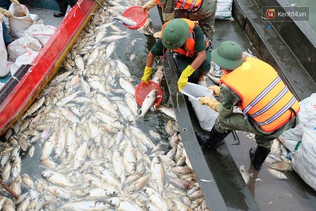 Các loại cá chết hôm nay khá to, có trọng lượng từ khoảng 1 đến vài kg.