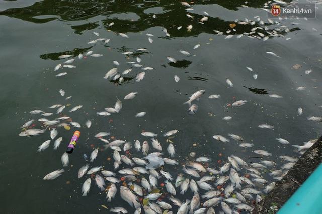 Sáng 4/10 công nhân vẫn tiếp tục vớt cá chết ở hồ Tây.