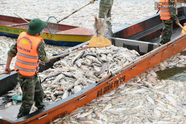 Thuyền chất đầy cá chết khiến nhiều người bàng hoàng.